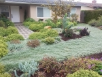 Bird Front Lawn 2
