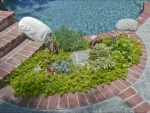 succulents-5-20-10-021